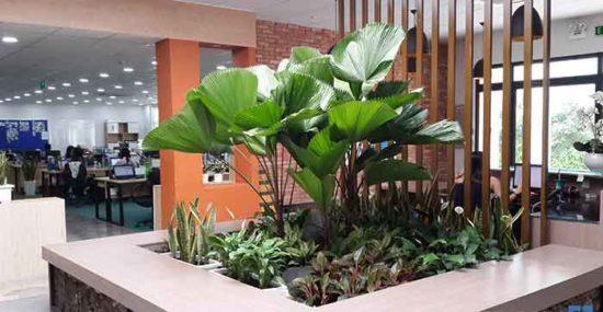 Ảnh minh họa cây cảnh dễ trồng, dễ phát triển và dễ chăm sóc