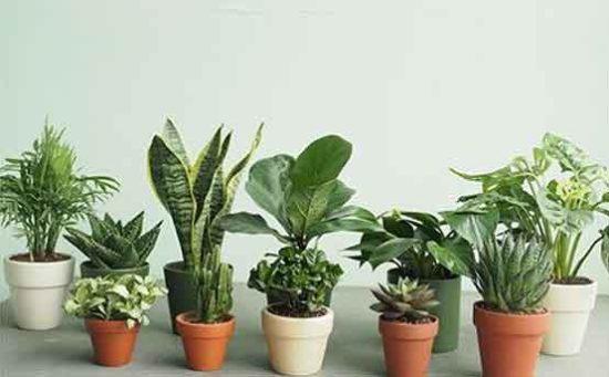 Ảnh minh họa những mẫu cây cảnh được trồng trong văn phòng