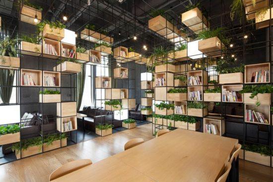 Rất nhiều doanh nghiệp lựa chọn trang trí cho văn phòng bằng cây xanh